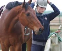 chevaux, loisirs, compétition équestre