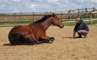 Training comportemental avec chevaux pour séminaires et coaching